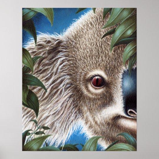 Curios Koala Poster