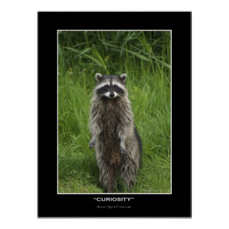 """CURIOSITY"" Coon Photo Posters"