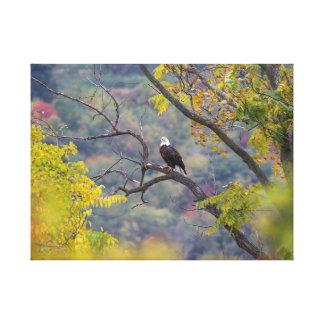 Curious Bald Eagle Fall Scene Canvas Print