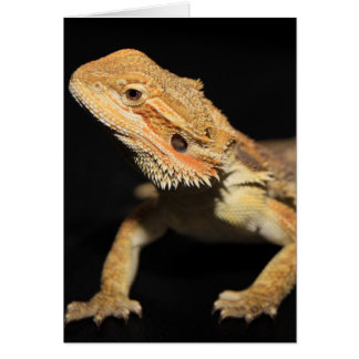 Curious Bearded Dragon 3 Greeting Card