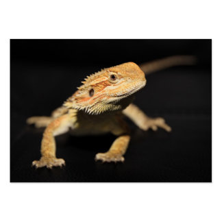 Curious Bearded Dragon Large Business Cards (Pack Of 100)