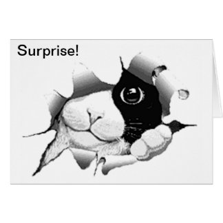 Curious Black and White Cat Birthday Surprise Greeting Card