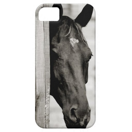 Curious Black Horse iPhone 5 Covers