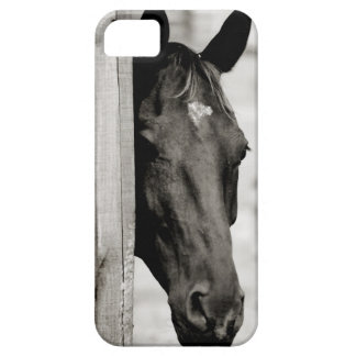 Curious Black Horse Case For The iPhone 5