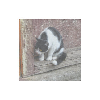 Curious Black & White Cat Stone Magnet