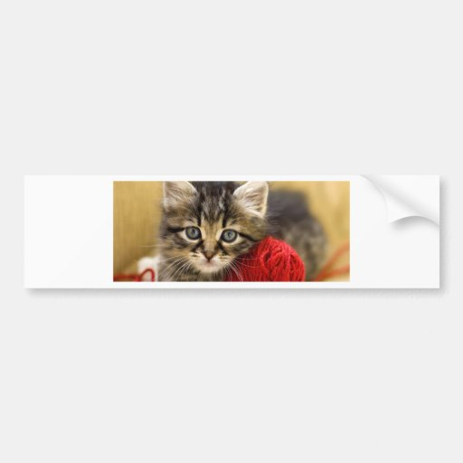 Curious Blue Eyed Kitten With a Red Ball of Yarn Bumper Stickers