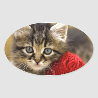 Curious Blue Eyed Kitten With a Red Ball of Yarn Stickers