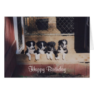 Curious Border Collie Puppies Birthday Card