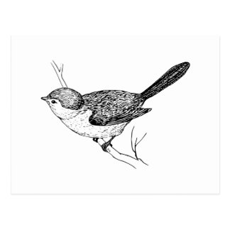Curious Bushtit Bird Sketch Postcard