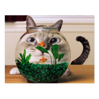 Curious Cat Behind A Fishbowl Postcard