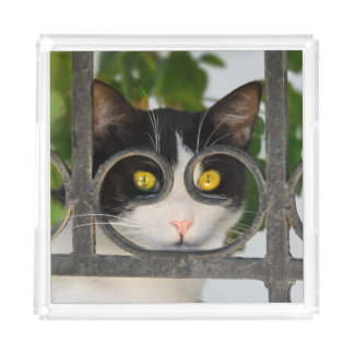 Curious Cat Spectacles Frame Funny Quadrat Acrylic Acrylic Tray