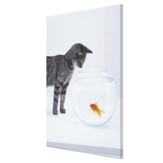 Curious cat watching goldfish in fishbowl canvas print