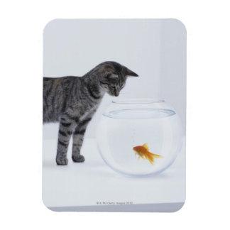 Curious cat watching goldfish in fishbowl rectangular photo magnet