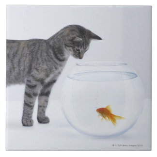 Curious cat watching goldfish in fishbowl tile