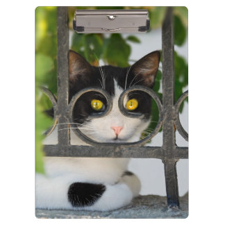 Curious Cat with Spectacles Frame Funny Photo on - Clipboard