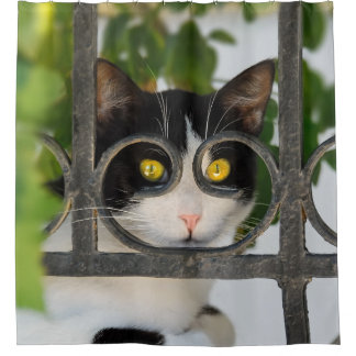 Curious Cat with Spectacles Frame Funny Photo  Tub Shower Curtain