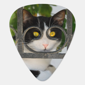 Curious Cat with Spectacles Frame Funny - Plectrum
