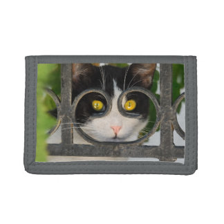 Curious Cat with Spectacles Frame Funny - Purse Trifold Wallets