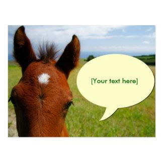 Curious colt with talk bubble postcard