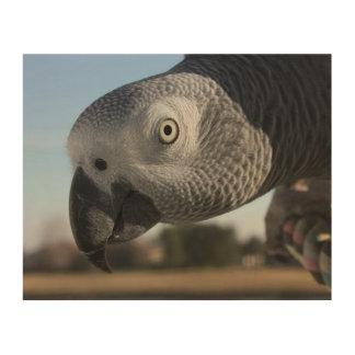 Curious Congo African Grey Parrot Wood Print