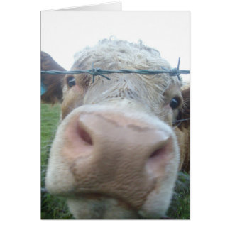curious cow card