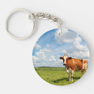 Curious cow standing on meadow. key ring