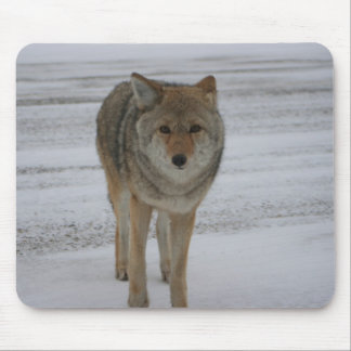 Curious Coyote Mouse Pad