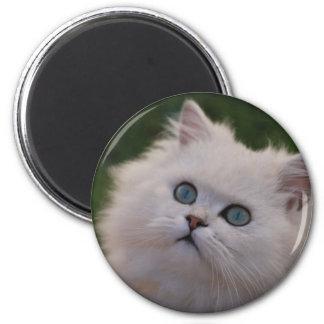 Curious cute white kitten 6 cm round magnet