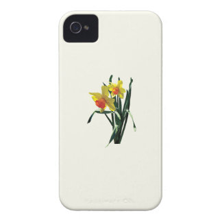 Curious Daffodils iPhone 4 Cover