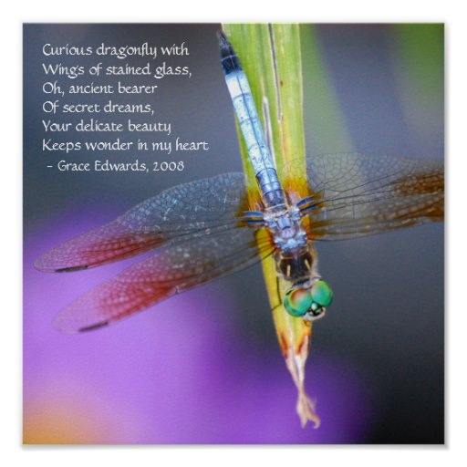 Curious Dragonfly Poem - poster / print