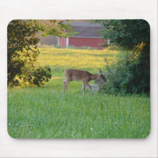 Curious Fawn Mouse Pad