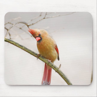 Curious Female Cardinal Mousepad