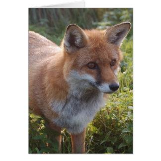 Curious Fox Greeting Card