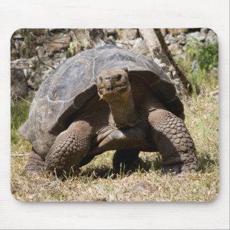 Curious Giant Tortoise   Galapagos Mouse Mat