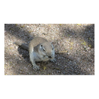 Curious Ground Squirrel Pack Of Standard Business Cards