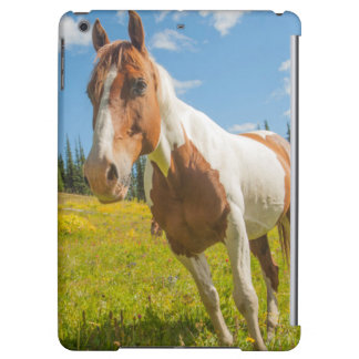 Curious horse in an alpine meadow in summer