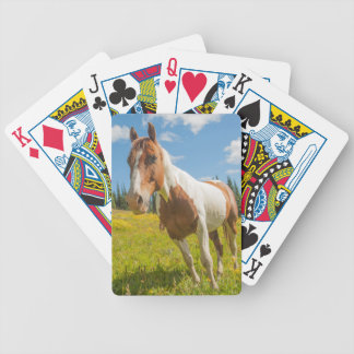 Curious horse in an alpine meadow in summer bicycle playing cards