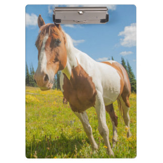 Curious horse in an alpine meadow in summer clipboard