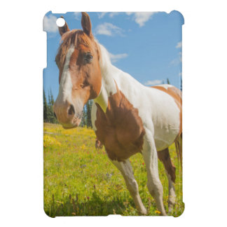 Curious horse in an alpine meadow in summer cover for the iPad mini