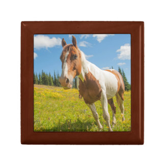 Curious horse in an alpine meadow in summer gift box
