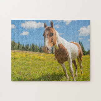 Curious horse in an alpine meadow in summer jigsaw puzzle
