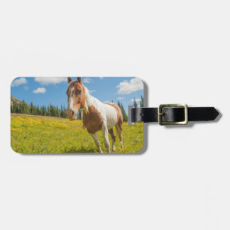 Curious horse in an alpine meadow in summer luggage tag