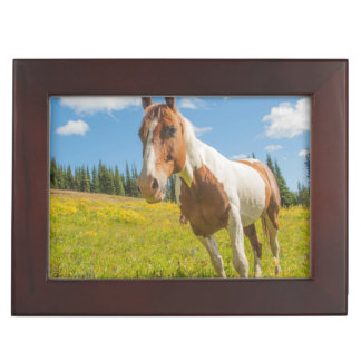 Curious horse in an alpine meadow in summer memory box