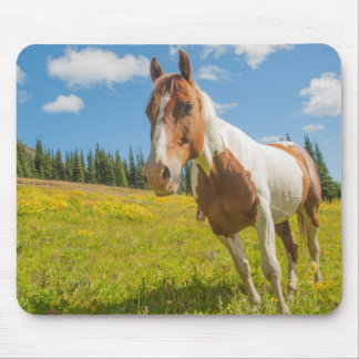 Curious horse in an alpine meadow in summer mouse pad