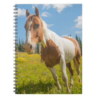 Curious horse in an alpine meadow in summer notebook