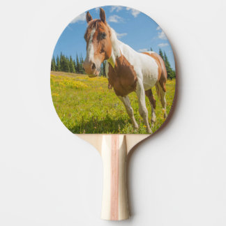Curious horse in an alpine meadow in summer ping pong paddle