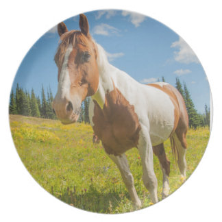 Curious horse in an alpine meadow in summer plate