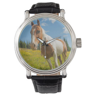 Curious horse in an alpine meadow in summer watch