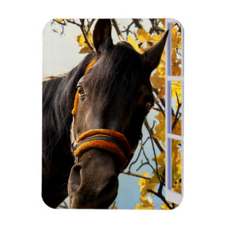 Curious Horse Looking Through The Kitchen Window Rectangle Magnets