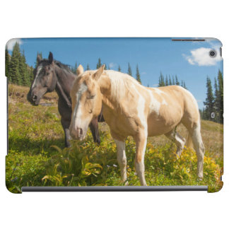 Curious horses foraging on grass